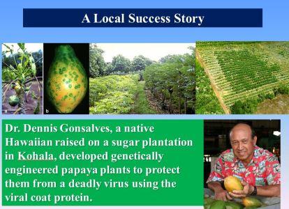 Papaya Story
