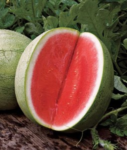 Seedless watermelon planted from seed