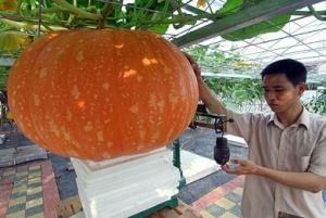 Giant Space Pumpkin