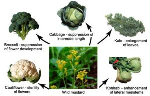 Modifications from a single plant species