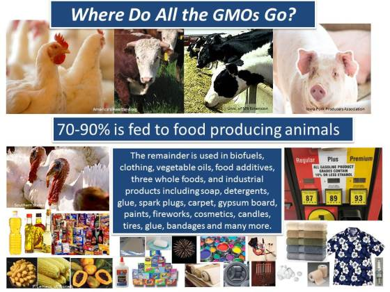 Where do the GMOs go